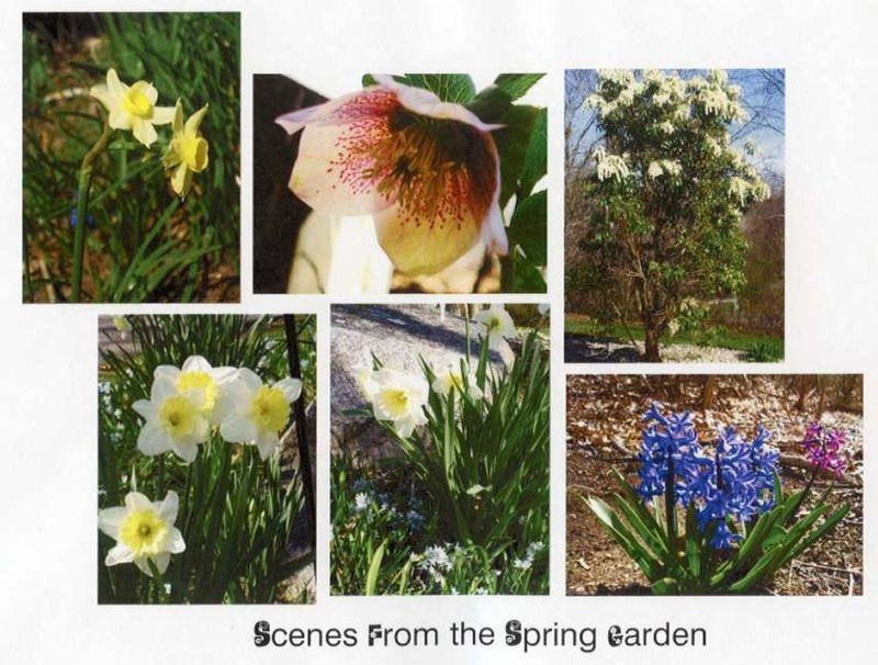 Scenes from the Spring Garden