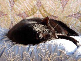 Sleeping Shadow