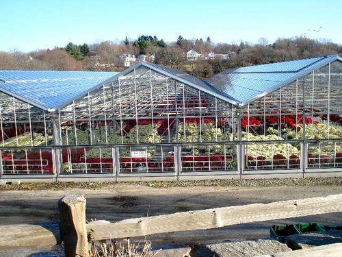 Wilson Farm Greenhouses