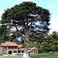 Massive Tree in Front of McClarren 'cottage'