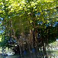 43 Tree Through Prism Lens
