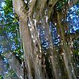 46 Tree #2 Through Prism Lens