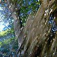 47 Prism Tree #2