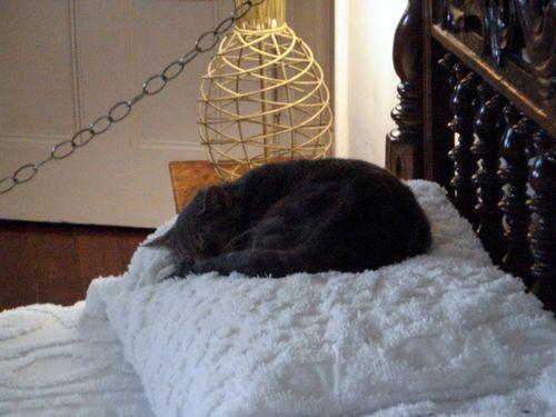 46 Hemingway's bed with descendant cat