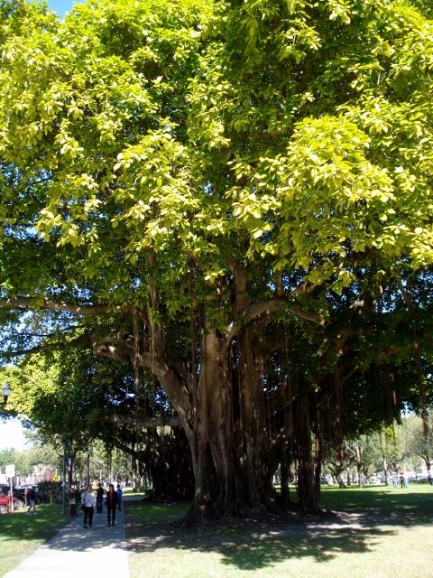 42 Tree