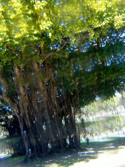 44 Prism Tree