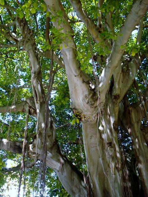45 Tree #2